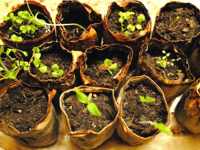 Cómo germinar semillas en contenedores de plástico