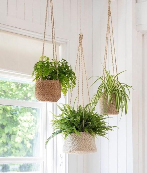 decorar la habitación con plantas colgantes