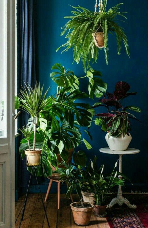 decorar una habitación con plantas en la pared