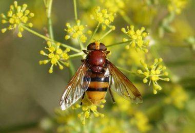 Insectos beneficiosos para el jardín