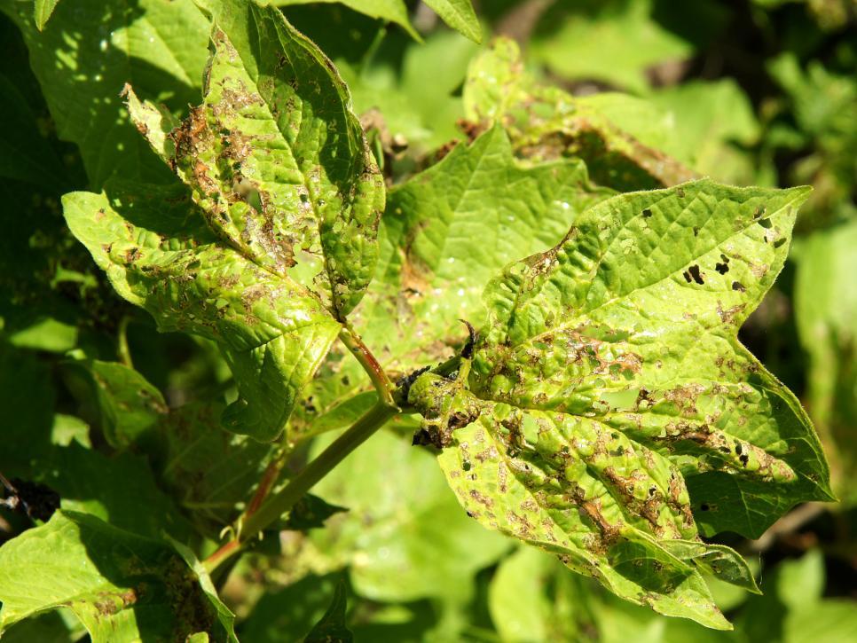 Cómo eliminar insectos del jardín con estas soluciones naturales