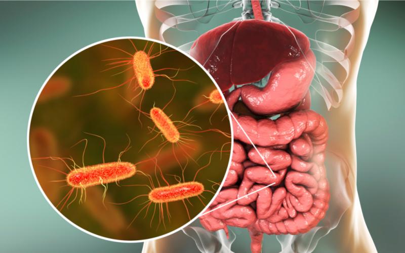 Descubriendo la relación entre el microbioma y la diabetes y otros padecimientos