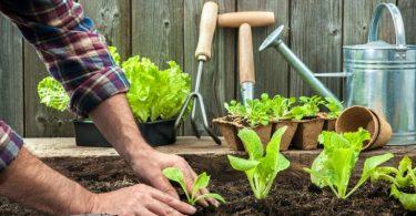 Cómo vivir de forma más sostenible