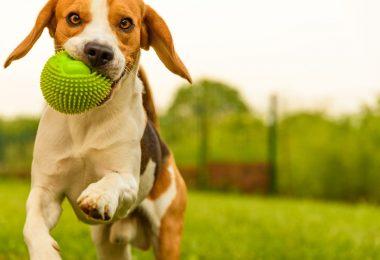 aditivos plásticos presentes en los juguetes para mascotas