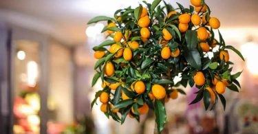 Árboles frutales que puedes crecer en el interior