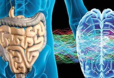 ¿Estás ansioso? Las bacterias intestinales y la relación con el cerebro