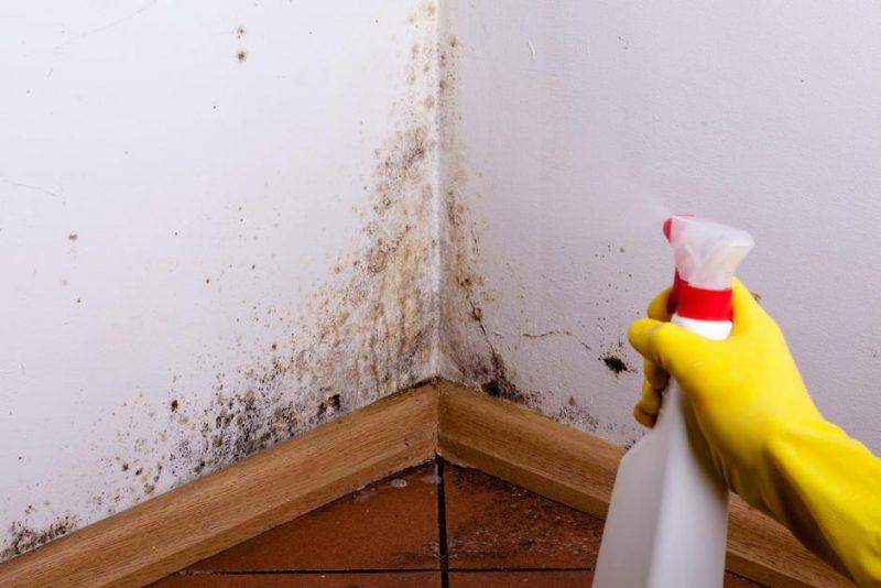 quitando humedad de las paredes