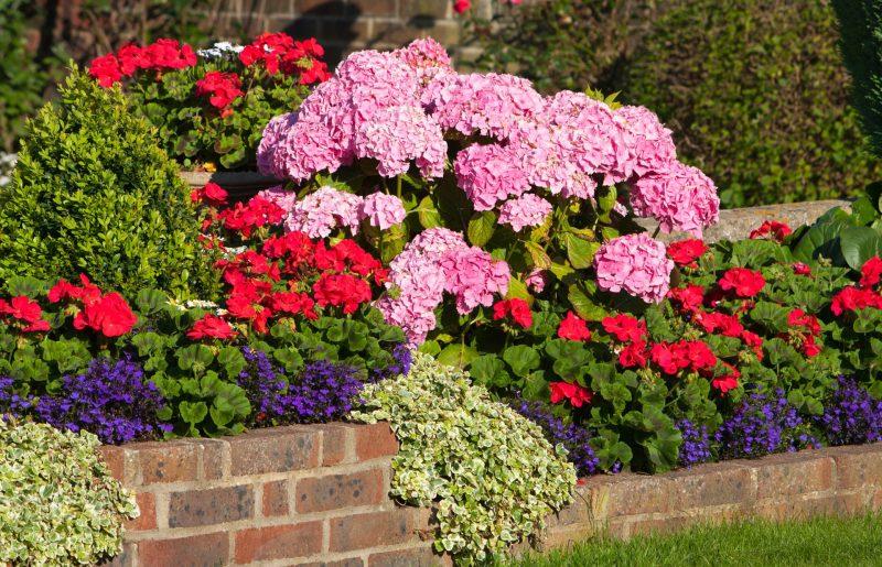 Las flores más resistentes al sol