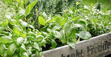 Hierbas mediterraneas que pueden crecer juntas