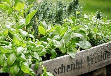 ¿Qué hierbas crecen bien juntas y cómo cuidarlas?