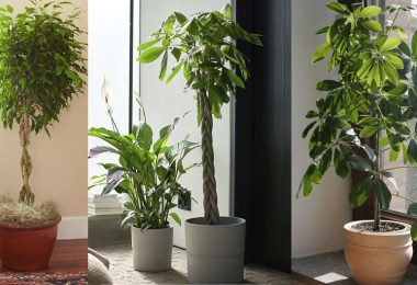 Las plantas que pueden crecer en el interior del hogar