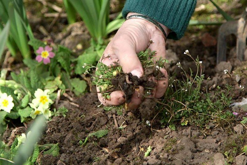 Tratar el moho en las plantas