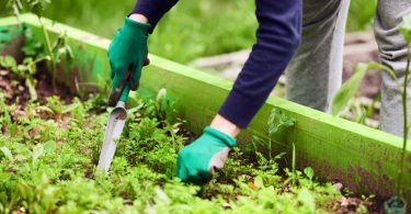 Soluciones naturales para el jardín