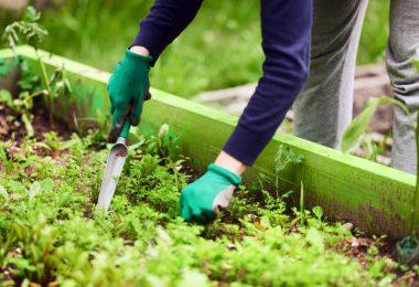 5 soluciones naturales para tener suelos y plantas más saludables