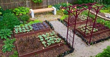 Cómo cultivar un jardín en casa