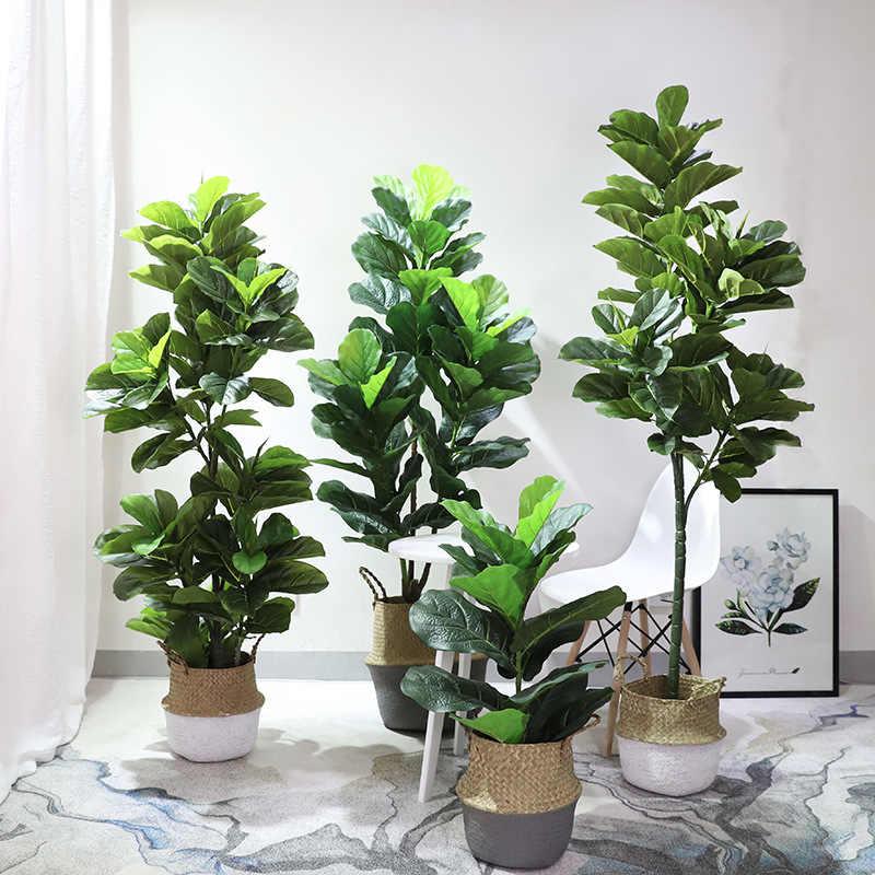 Ficus para tener en el interior del hogar