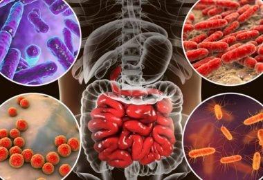 Relación entre intestino permeable y aumento de peso