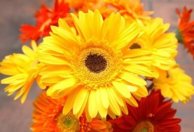 Las flores afectan tus emociones de estas 5 sorprendentes formas