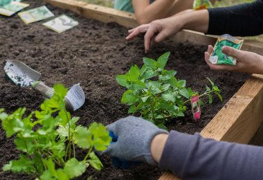 Los mejores ingredientes para poner en la tierra de nuestro jardín