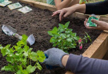 9 ingredientes secretos para hacer crecer tus plantas