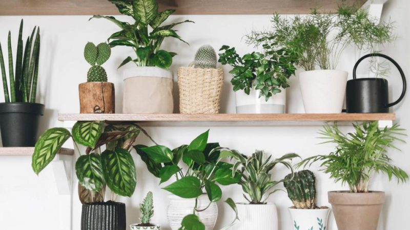 Plantas de interior para mejorar tu estado de ánimo