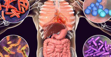 Daños a la flora intestinal por los antibióticos