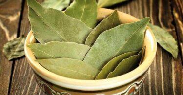 Conoce los beneficios de las hojas de laurel para tratar la diabetes