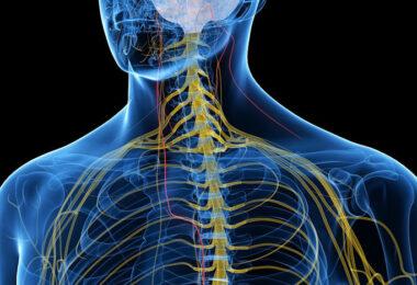 Estimular el nervio vago