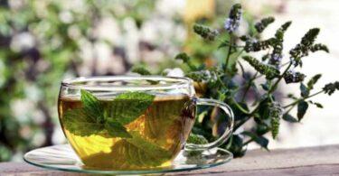 Hierbas diuréticas que puedes incluir en tu alimentación