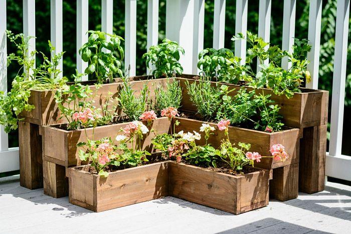 Errores al cuidar un jardín de hierbas