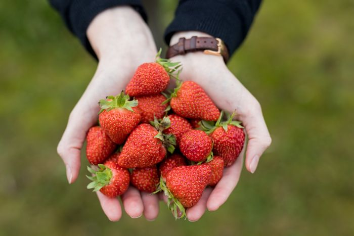 Beneficios de comer fresas