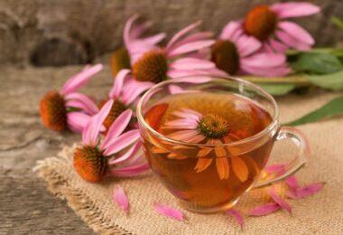 Plantas medicinales para fiebre tifoidea
