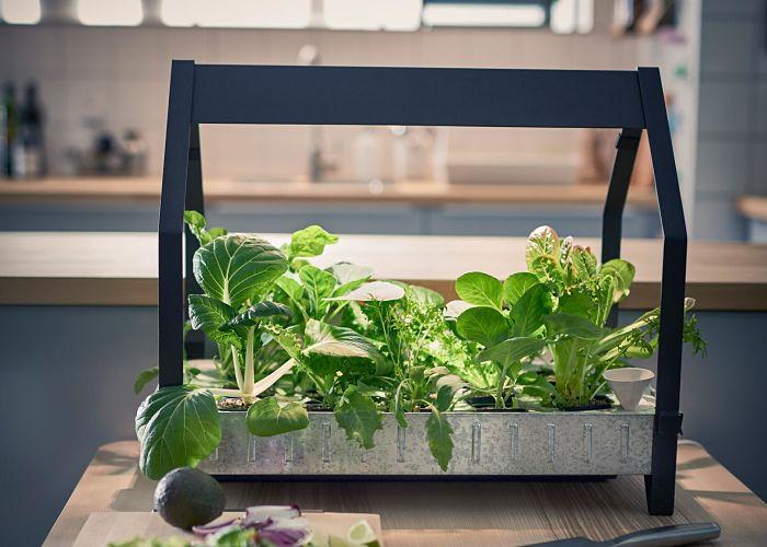 Qué es la hidroponía y plantas para cultivar