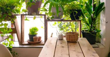 Los beneficios de las plantas de interior para tu salud
