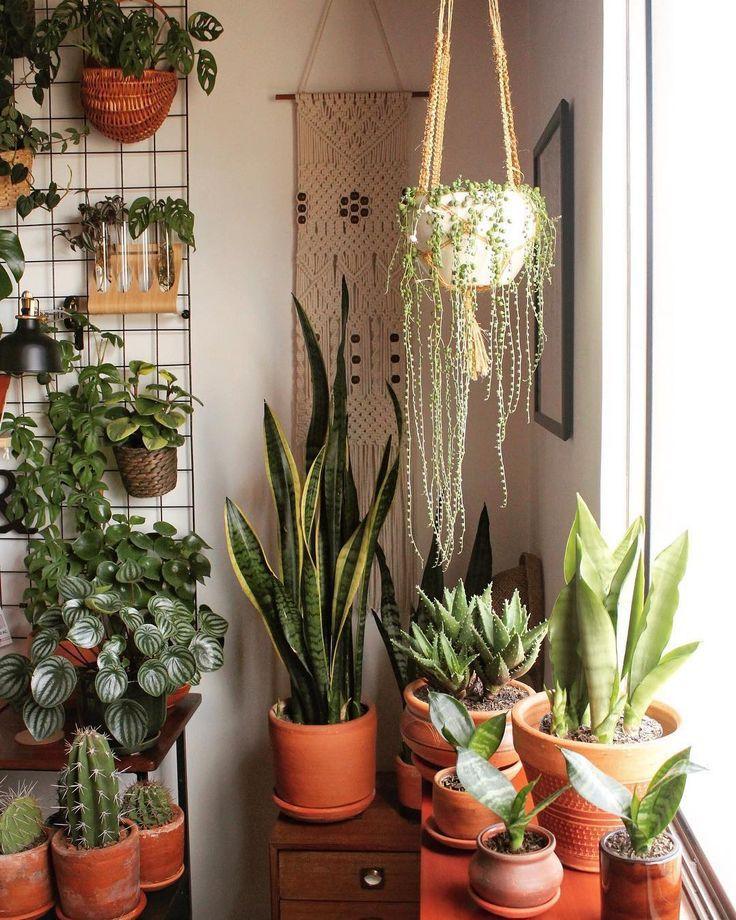 decoración bohemia plantas