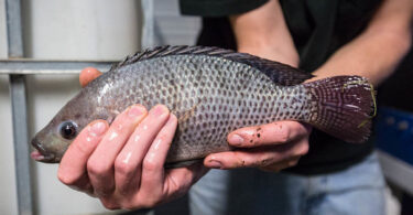 16 tipos de pescado que podrían ser dañinos