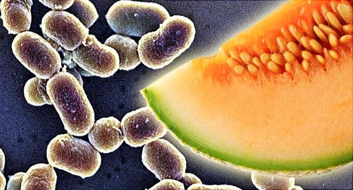 Bacterias comunes en los alimentos