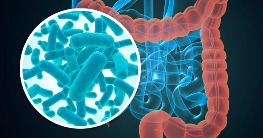 El microbioma y kla calidad del sueño