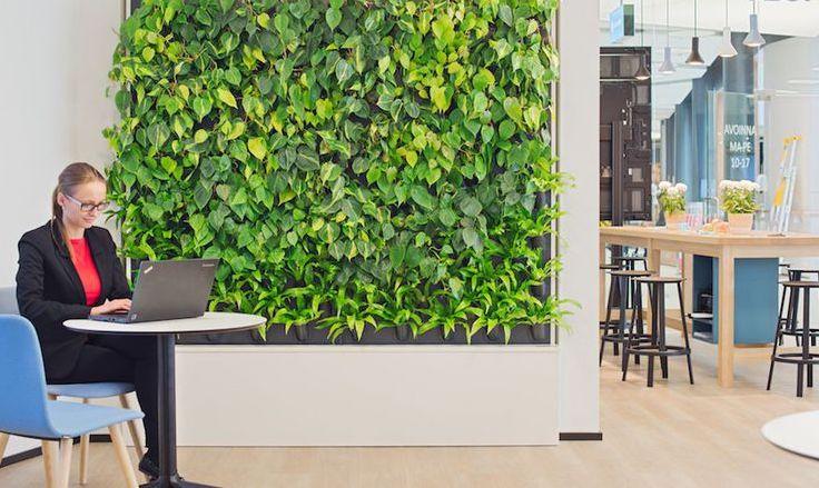 plantas para oficina paredes vivas