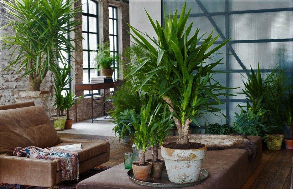 Mejores palmeras para el interior