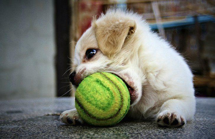 perro está jugando con pelota