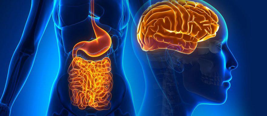 microbiota t cerebro