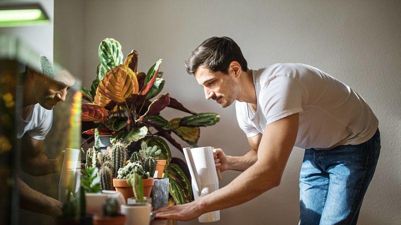 Aprendiendo a cuidar las plantas de interior