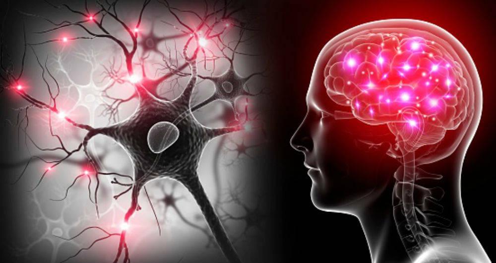 Hábitos que mejoran la salud cerebral