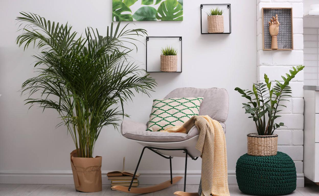 Plantas de interior que sirven para humedecer el aire